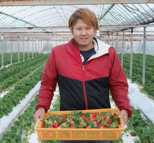 イチゴ農家 福井鉄也