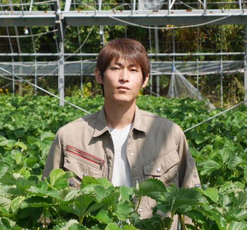 イチゴ農家 山崎翔太