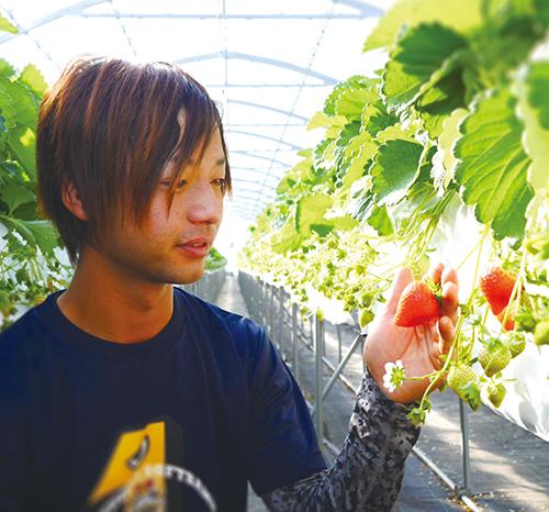 イチゴ農家 橋本 元徳