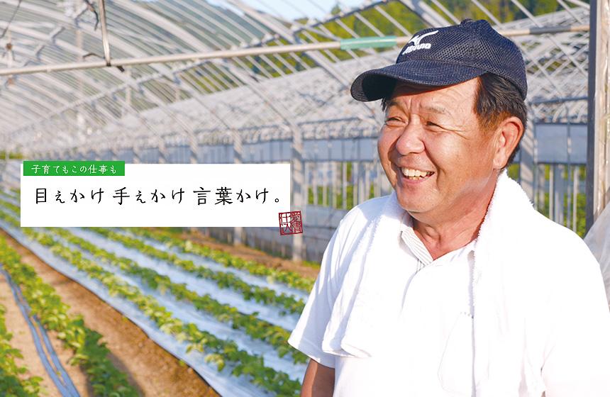 イチゴ農家 大浦 正巳