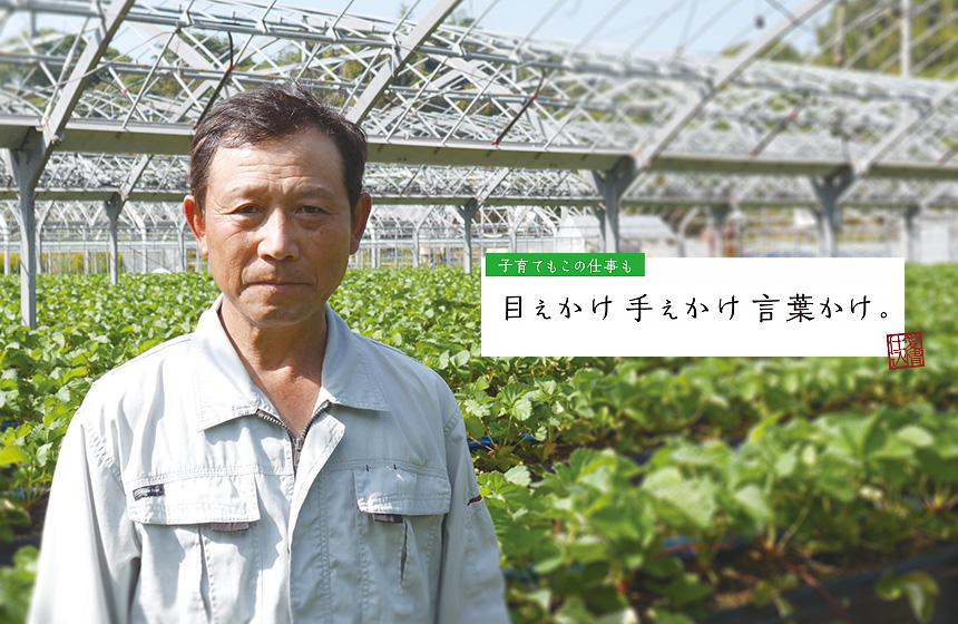 イチゴ農家 松元 朋幸