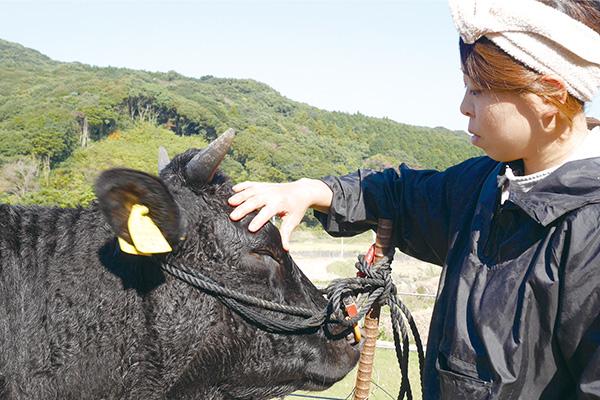 牛を撫でる愛莉さん